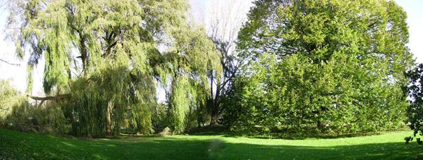 Великі дерева на місцевості