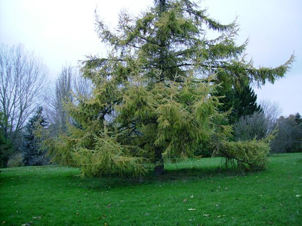 Маленьке дерево з великою кроною на місцевості
