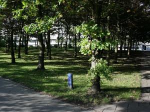 Парк на місцевості