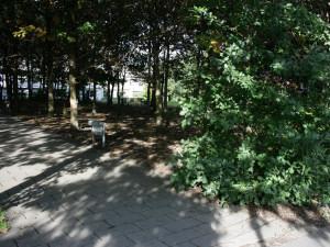 Ліс на місцевості