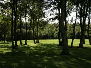 Окремі дерева на місцевості