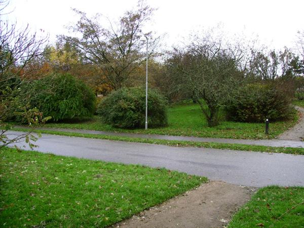 Вузька смужка газону на місцевості